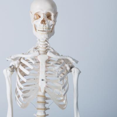 funzione-ormonale-ossa
